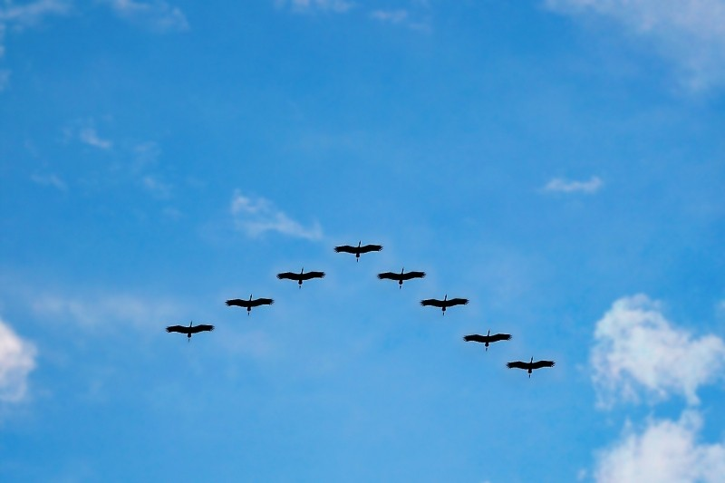 2-low-angle-view-of-birds-in-sky-with-clouds