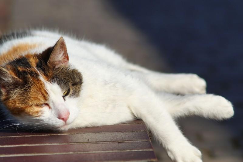 cat-wall-lazy-rest-heat-sun